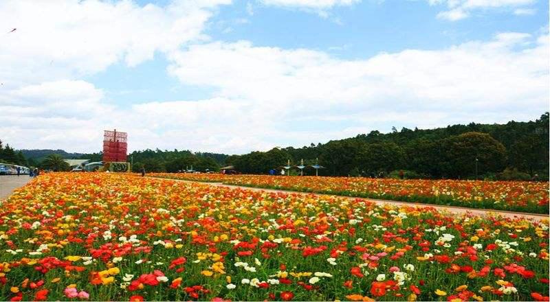 强芳传全球:第十六届中外避暑旅游目的地排行榜